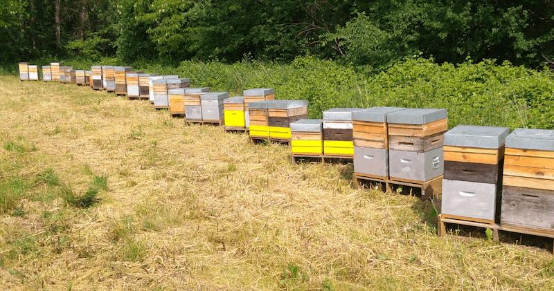 ruches texereau