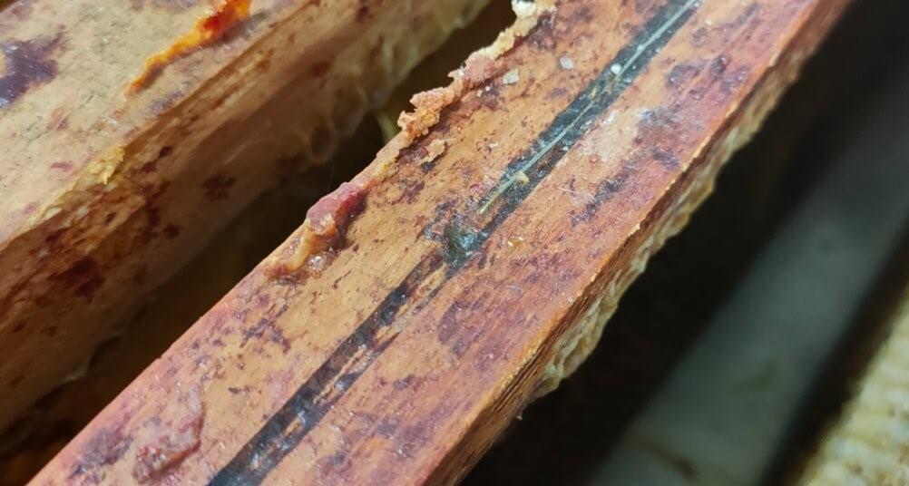 propolis naturel