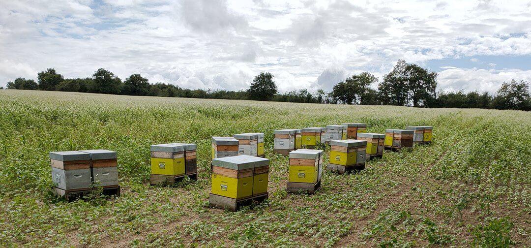 champ ruches